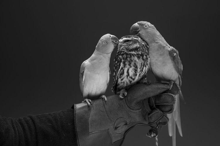 Avian Avian Collection B&w Bird B&w Birds Bird Bird Photography Birds Bnw_friday_eyeemchallenge Close-up Day Focus On Foreground Nature No People