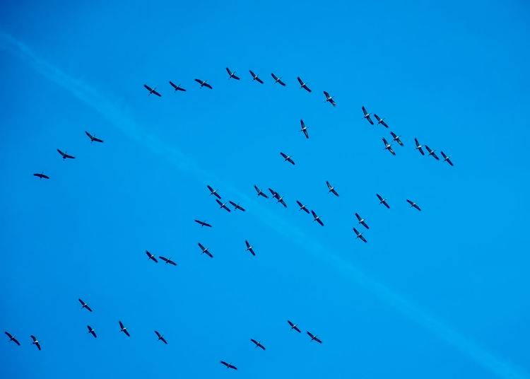 cranes wing