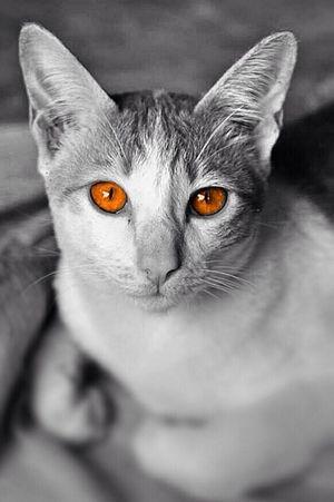 Eye4photography  Cat Hello World EyeEm
