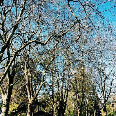 Trees Igerslugo Landscape