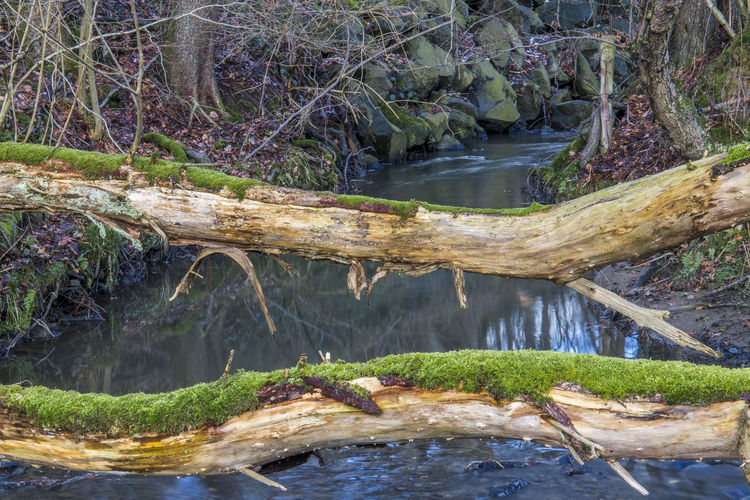 Bachlauf Creek Hanfbach Nature Photography Naturfotografie Beauty In Nature Outdoor Photography Westerwald EyeEmNewHere