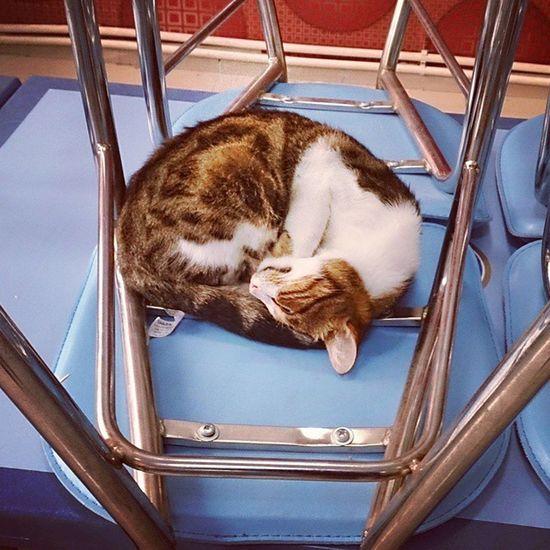 Kedi Keyf Zzz Günaydın cat happy sleep