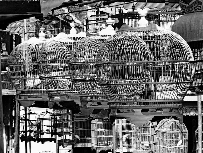 Cage without birds Monochrome Travelling Pivotal Ideas