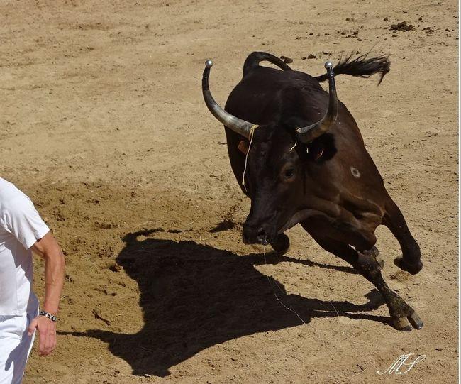 Férias Protection Of Nature Animaux Animaux ❤️ Protection Taureau Vache