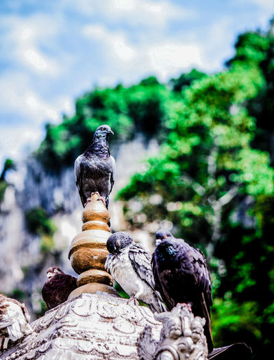 Bird perching on statue