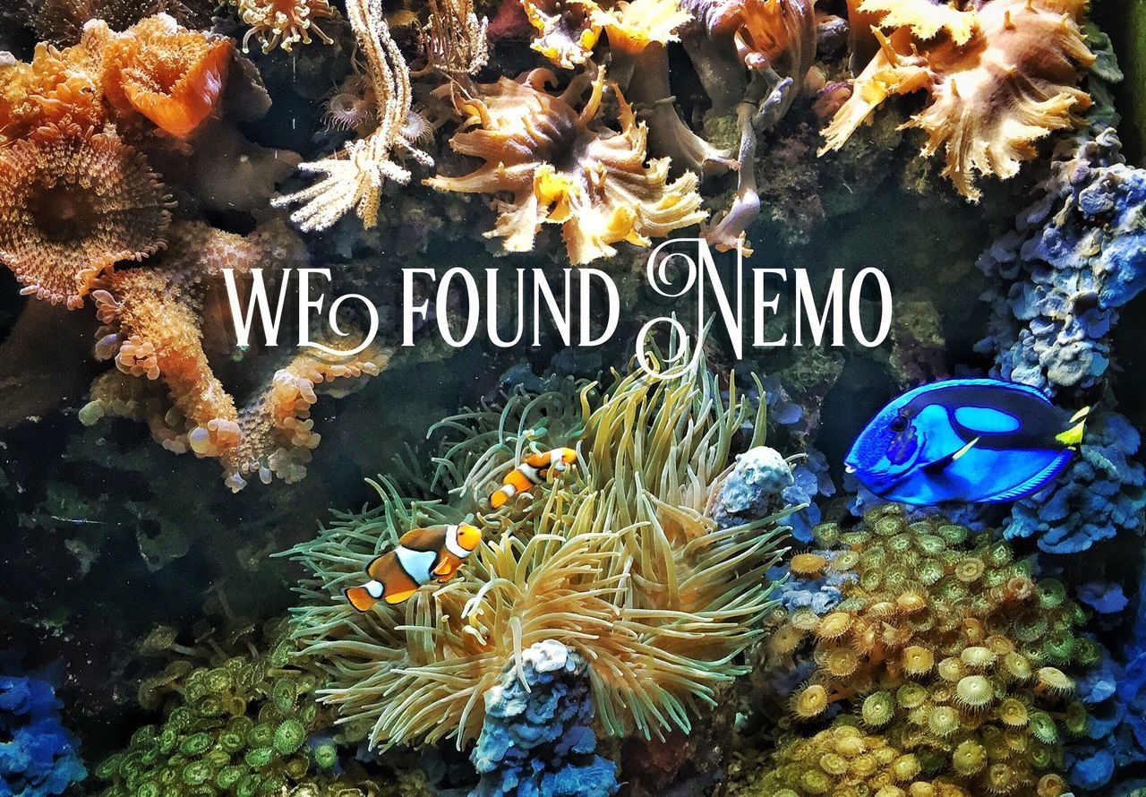 text, underwater, sea life, fish, no people, undersea, nature, animal themes, coral, close-up, outdoors, beauty in nature, day, swimming, water