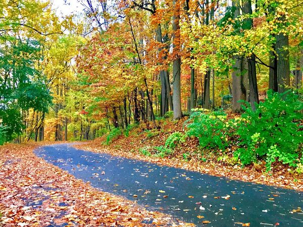JeanneRotaMatthews Autumn Tree Leaf Nature Change Beauty In Nature Scenics Road Tranquility Outdoors Forest Day Tranquil Scene No People The Way Forward Sunlight Landscape Tree Trunk Growth Sky From Where I Stand