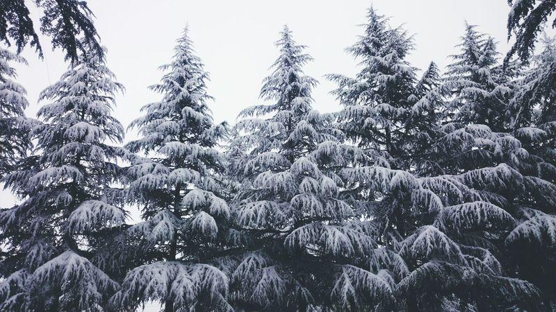 Winter Snow Georgia Guria საქართველო ზამთარი თოვლი