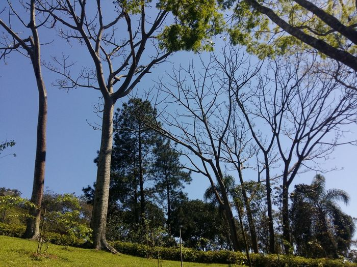 Tree Nature Beauty In Nature Sky Outdoors Day Tranquility Scenics Low Angle View Freshness Nature Brazil Collection Photo EyeE Landscape