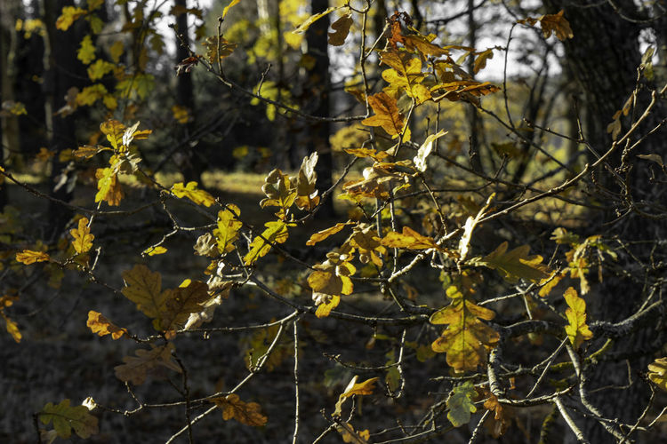 Plant Tree Growth Nature Branch Plant Part Day Leaf No People Beauty In Nature Tranquility Outdoors Focus On Foreground Yellow Autumn Change Sunlight Close-up Land Leaves Lichen