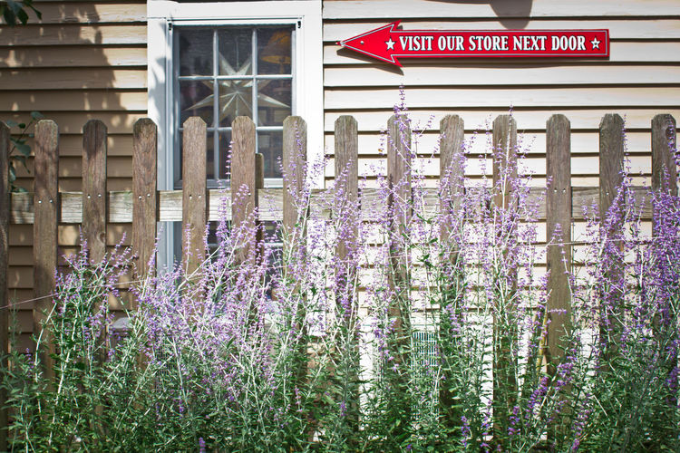 Lavender & picket fence Picket Fence Sign Building Exterior Day Flower Freshness Lavender No People Outdoors Sign Board