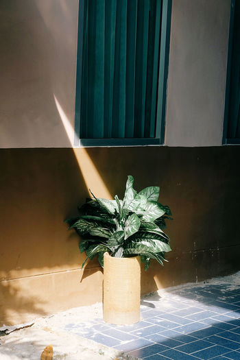 Potted plant on tiled floor