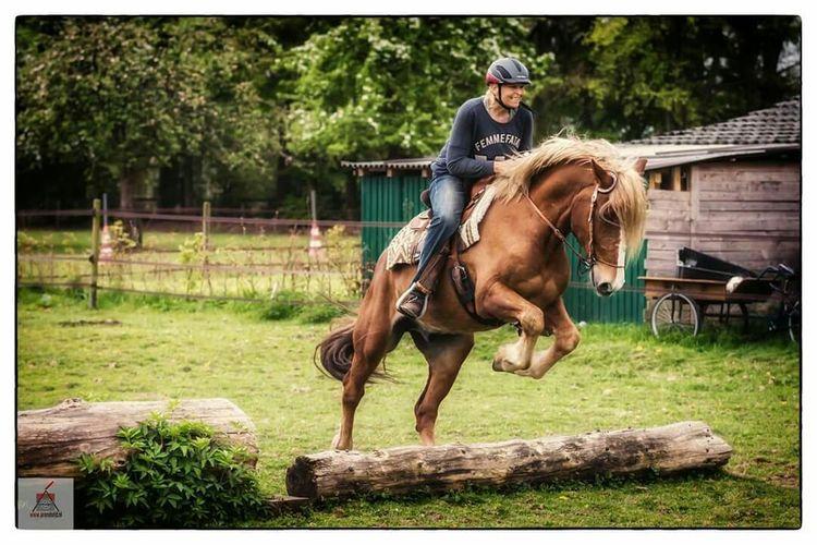 Horse Blackforrest Chessnut SchwarzwalderFuchs Canon5dmarkiii Canon 70-200 F2.8 L IS-II EyeEm Nature Lover Nature Horse Jumping Horses Horsepower