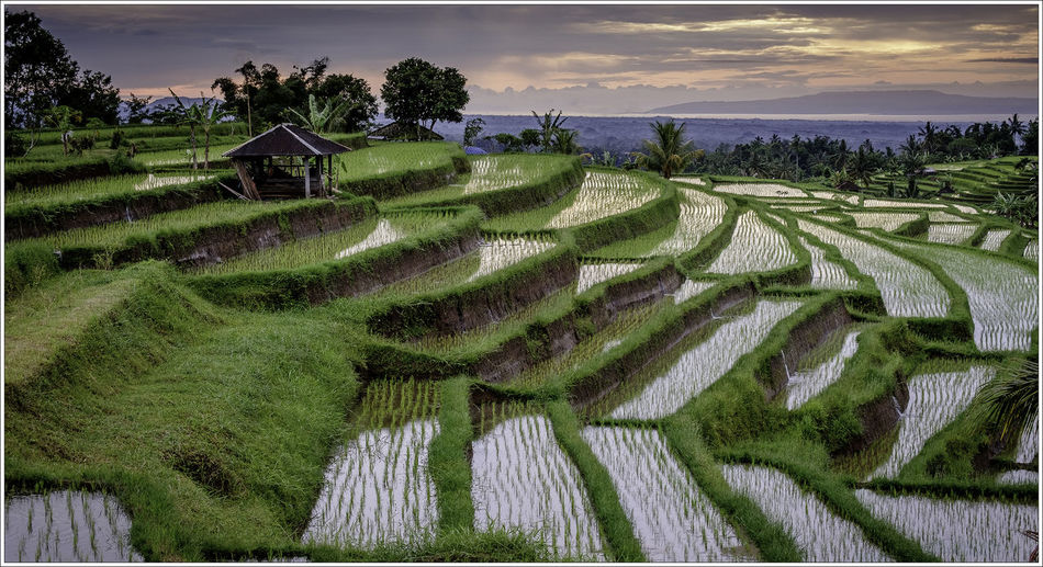 Agriculture Architecture Beauty In Nature Day Field Landscape Mountain Nature No People Outdoors Paddy Fields Rice Terraces Rural Scene Scenics Sea Sky Terraced Field Tranquil Scene Tranquility Tree World Heitage Site