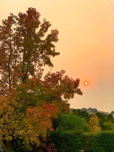 """""""Sun n' Smoke"""" Arriving to my hometown in Northern California for an extended family visit, I encountered an apocalyptic eeriness of invading smoke from the wildfires in Northern and Southern California, giving the sun a very surreal look. Smoky Sky Northern California Sky Eerie Wildfires Heavy Smoke Surreal Autumn Sun Smoke Sky Orange Color Environment"""
