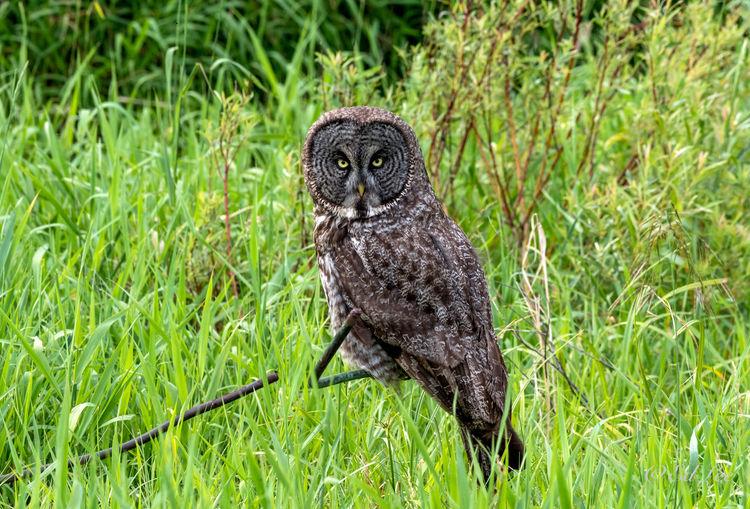 Black bird on grass