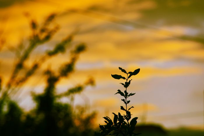 Outdoors Silhouette Sunset No People Beauty In Nature Tree Shadow Nikon D5200 Amatuerphotography EyeEm Best Shots Sky Cloud - Sky NikonD5200 Nature Leaf Plant Sunset Dusk Evening