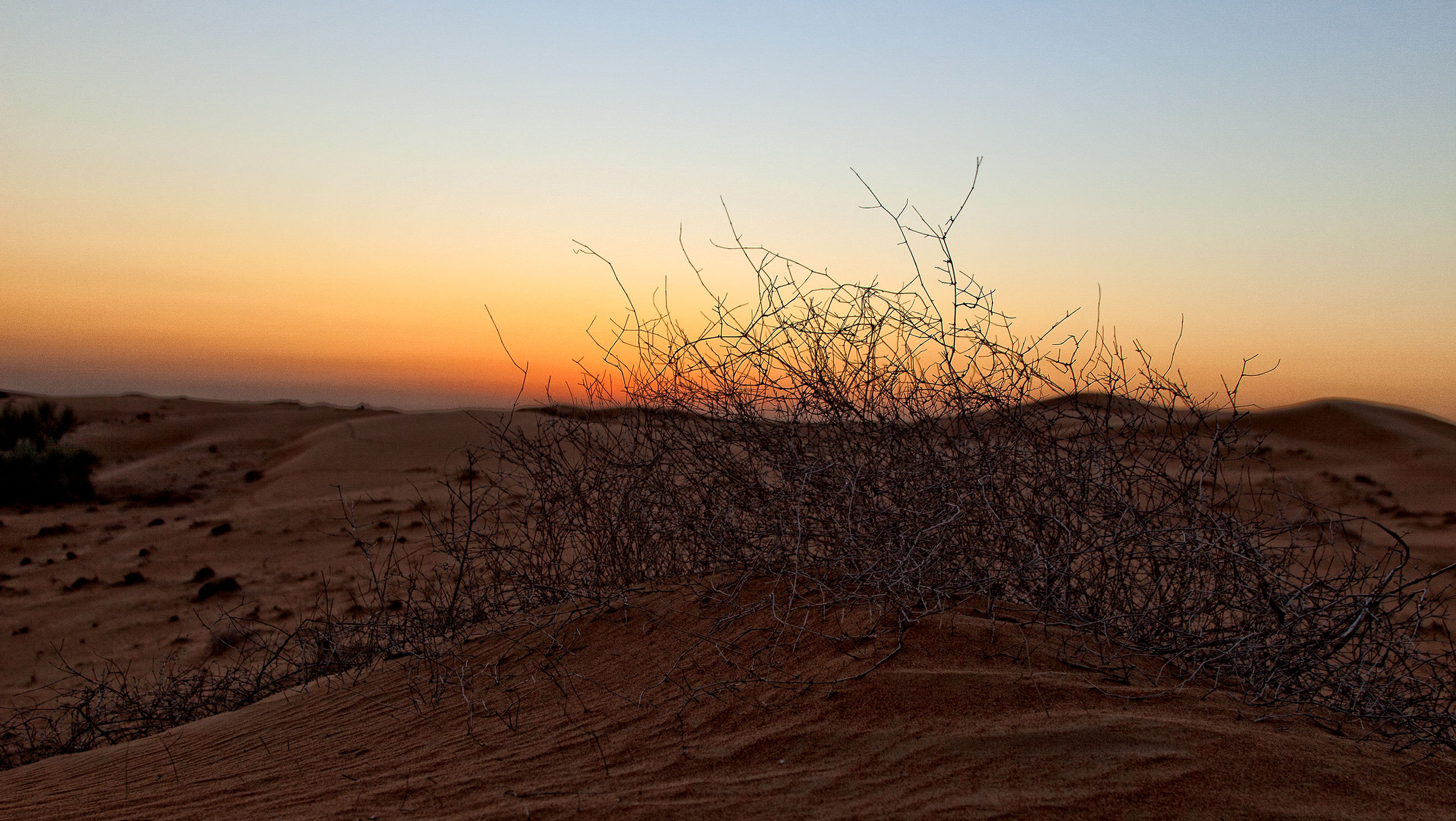 sunset, tranquil scene, desert, tranquility, landscape, arid climate, clear sky, scenics, nature, sand dune, sand, beauty in nature, barren, horizon over land, copy space, remote, non-urban scene, sky, idyllic, dry