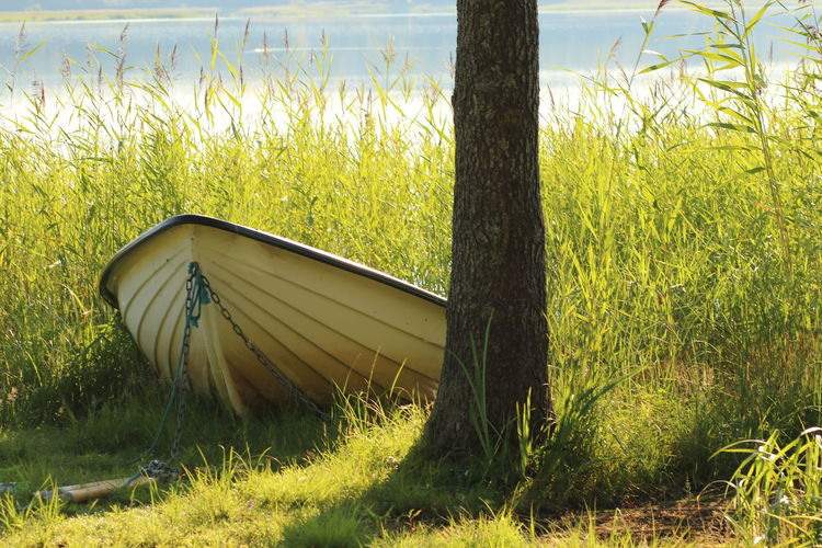 Beauty In Nature Boat Boat On Lake Boat On Land Boat On The Beach Day Grass Lake View Lakeside Mode Of Transportation Nature Plant Tranquility Transportation Tree Tree Trunk Trunk Water