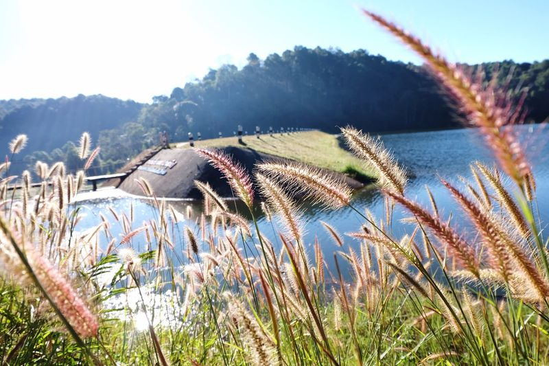 Pangoung, Maehongson Pangoung Nature Grass Growth Outdoors No People Plant Beauty In Nature Close-up Freshness Sky Day