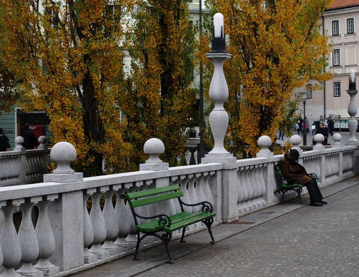 Bench Benches City Leisure Activity Lifestyles Man With Hat Outdoors Resting Resting Time Sleeping Outdoors Sleeping Outside Tree Urban Ljubljana Slovenija