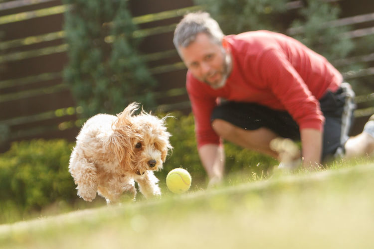 Surface Level Of Man Playing With Dog On Field