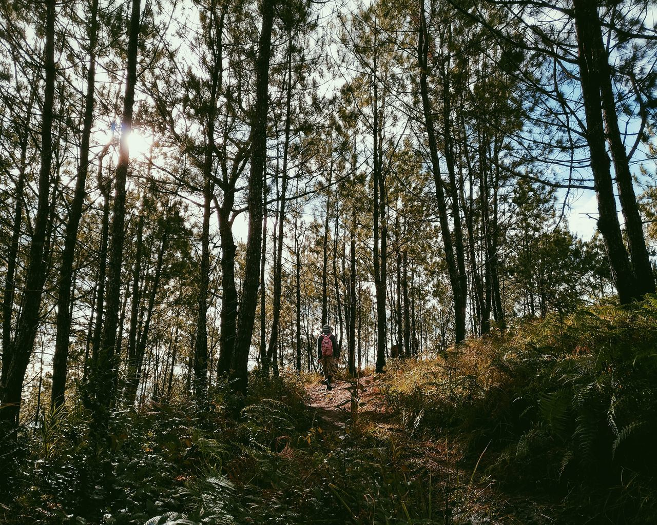 Rear View Of Person Walking Amidst Trees At Forest