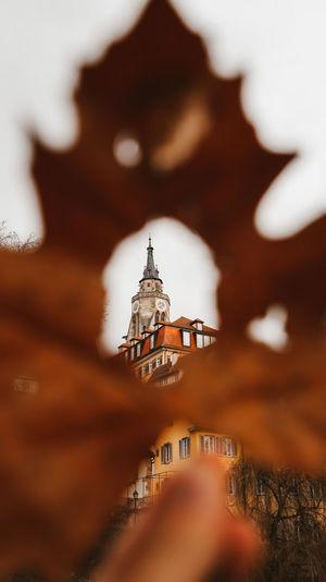 Church seen through leaf