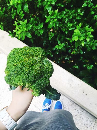 Cropped image of woman holding broccoli