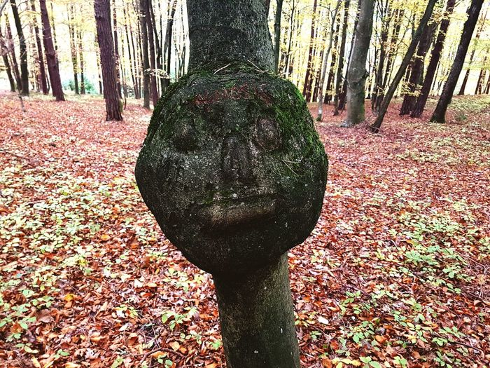 Treeface Tree Tree Trunk Nature Outdoors Forest Close-up Day Selfie Portrait Faces Of EyeEm Tree_collection