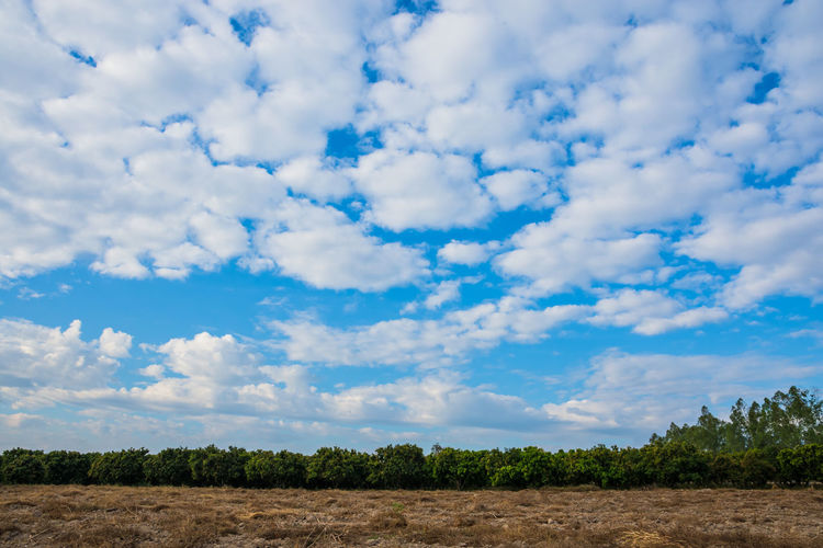 Beautiful Sky and clouds Agriculture Cloud - Sky Day Flower Landscape Nature No People Outdoors Plant Rural Scene Scenics Sky