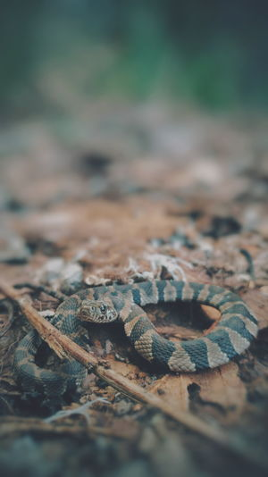 Reptile Animals In The Wild Animal Themes Nature Animal Wildlife One Animal No People Day Animal Scale Outdoors Close-up Beauty In Nature Herpetology Nerodia Snake