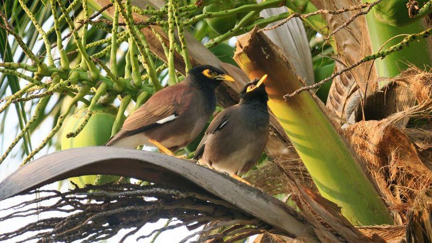 Beatuy Nature Phi Phi Thailand Tropical Climate Tropical Paradise Wildlife & Nature Wildlife Photography