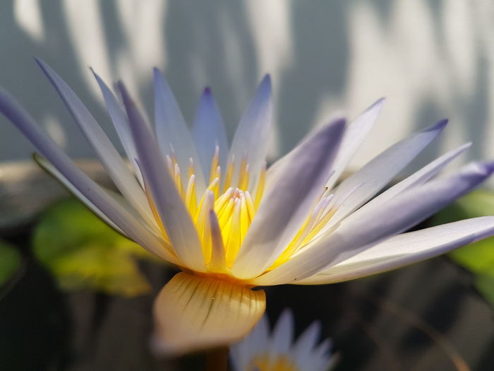 Flower Nature Beauty In Nature Petal Close-up Freshness Plant Flower Head
