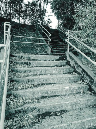View of stairs along trees