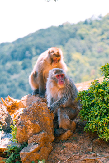 Monkey Team