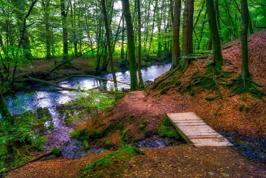 Forest Forestwalk Magical Forest Outdoors Outdoor Photography The Great Outdoors - 2016 EyeEm Awards Majestic Nature Stream Bridge Altenberg Waldspaziergang Wald