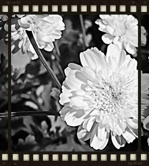 Enjoying Life Des Fleurs