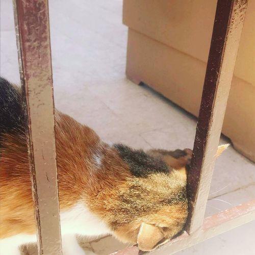 cats of Egypt EyeEmNewHere Cat Egypt Elgouna Pet Animal Travel Close-up