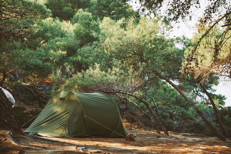 Tent in the forest Adventure Camp Camping Camping Tent Forest Hike Hiking Hiking Trail Leisure Nature Outdoors Settled Tent Tree Trek Wild Wilderness