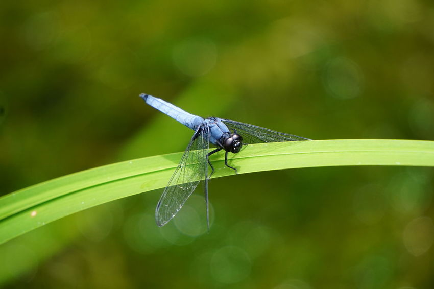 #Dragonfly Animal Themes Animals In The Wild Beauty In Nature Focus On Foreground Green Color Insect Leaf Nature Outdoors Plant