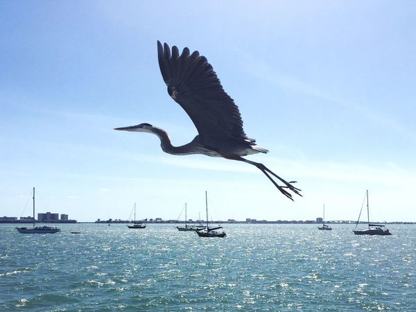 Beach Light Point Of View Florida Flying Birds Bird Photography Animal Photography Port Landscapes With WhiteWall