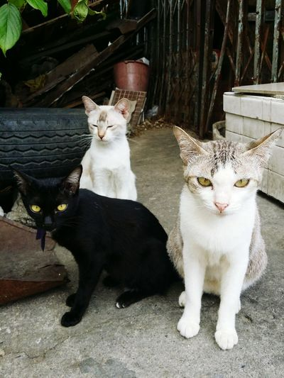 Cute Cats Socute Cats #cutecats 🐈💓