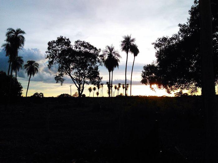 Silhouette trees on beach against sky