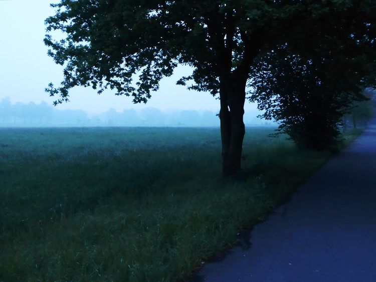 Morningview😍 Landscape Foggymorning Frühnebel On My Way To Work!  My Soul's Language Is📷 Healing Powers Of Nature For My Friends 😍😘🎁 Tranquil Scene Love My Life❤ Simple Beauty Nature Surrounds Me Enjoyinglife  Eye4photography  Beauty In Simplicity Beauty In Nature Tranquility Foggy Landscape