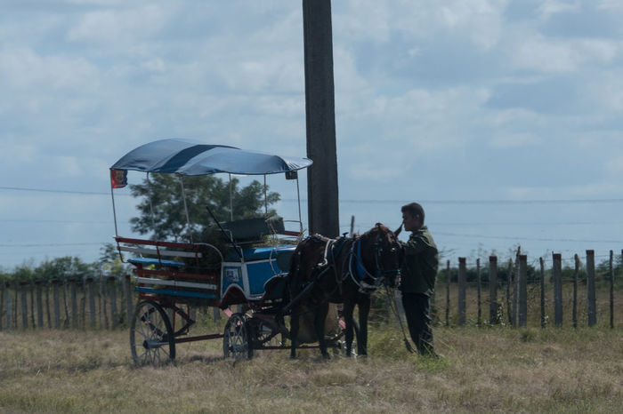 Horse carriage having a break 2016 Adult Adults Only Cloud - Sky Clouds And Sky Cuba Cuba Collection Day Domestic Animals Horse Lifestyles Mammal Occupation On The Road Again One Animal Oriente Outdoors People Real People Sky Travelling Photography Working Animal