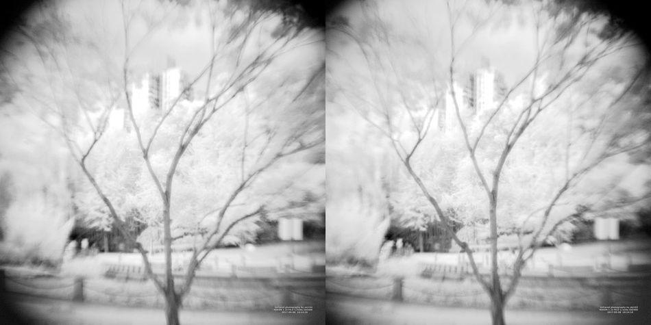 3D Art 3D Photo 3D Photography 3Dart IR Infrared Stereoscopic 3D Stereoscopic Photography Bare Tree Infrared Camera Infrared Filter Infrared Photo Outdoors Sky Stereo Photo Stereoscopic Tree Vr