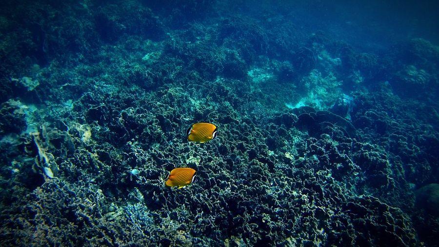 Fish in a Sea