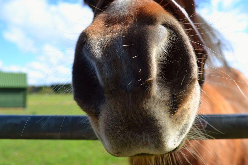 Horse Selfies Cogges Farm Farm Farm Life Closeup