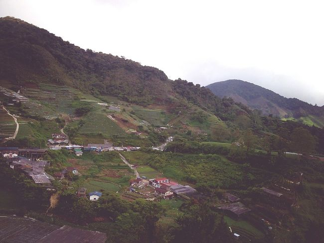 Cameron Highlands, 2004. Malaysia Hills Landscape